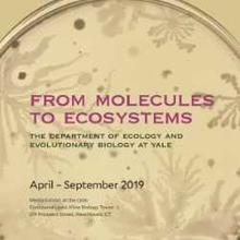 From Molecules to Ecosystems